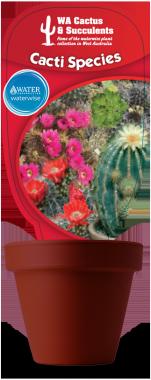 Cacti-_Species_01Monadenium-Discocactus-Echinofussulocactur-Echinocereus-Astrophytum