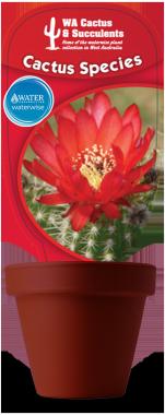 Cactus-Species-Echinocactus-Ferrocactus-Melocactus-Notocactus