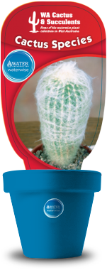 Cactus-Species-Espostoa