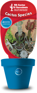 Cactus-Species-Euphorbia