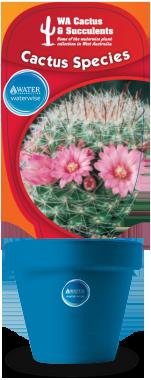 Cactus-Species-Mammillaria